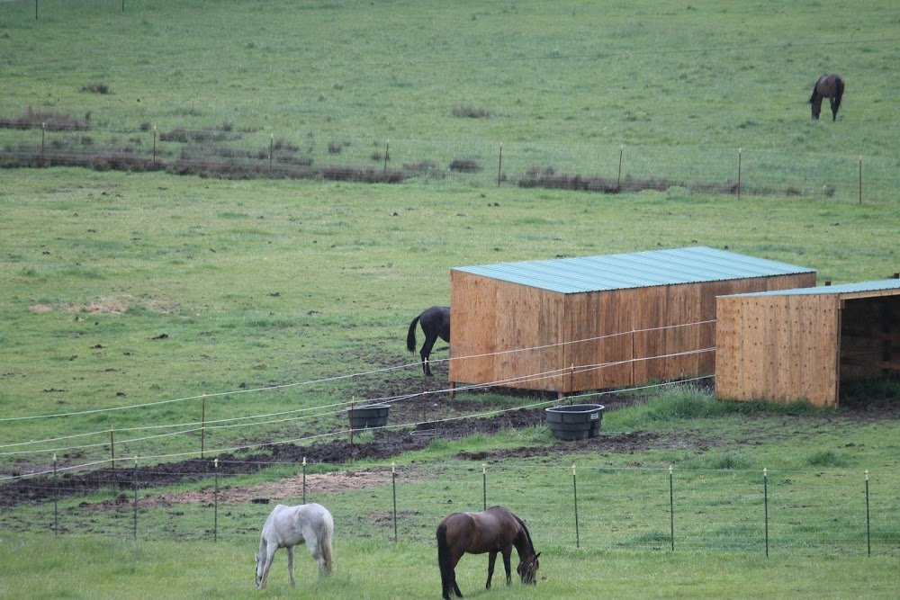 Oregon Horse Rescue Facility